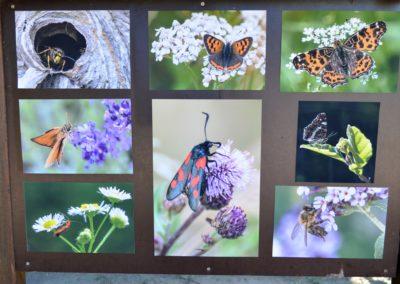 Infotafel Insekten